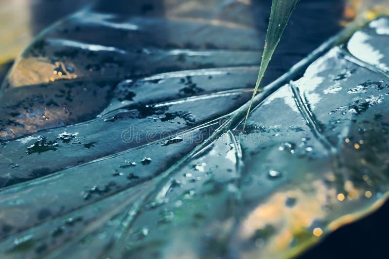 O verde tropical deixa o fundo com as gotas de água, samambaia, palma, fundo floral do conceito do teste padrão da selva, fim aci foto de stock royalty free