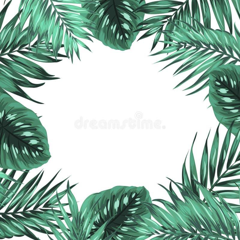O verde tropical do monstera da palma da selva deixa o quadro ilustração do vetor