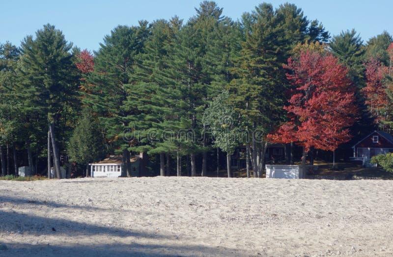 O vermelho brilhante do Sandy Beach do outono de Maine da serenidade da folhagem de outono deixa profundamente - árvores verdes foto de stock