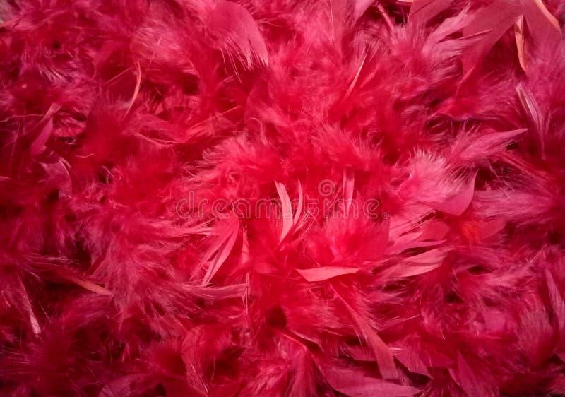 O vermelho empluma-se o fundo da plumagem fotos de stock royalty free
