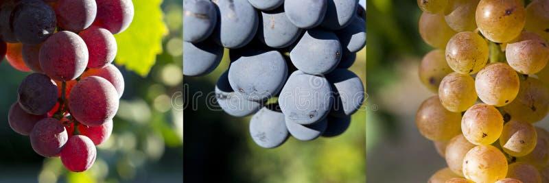 O vermelho, enegrece uma colagem das uvas brancas imagem de stock royalty free