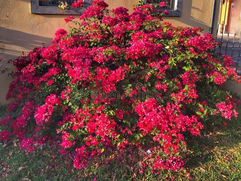 O vermelho floresce Costa Rica fotos de stock