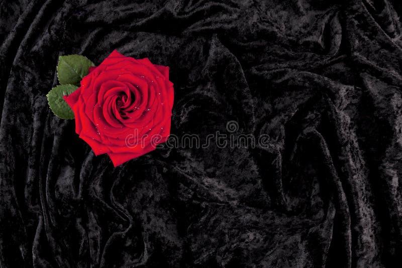 O vermelho levantou-se no veludo preto imagens de stock royalty free