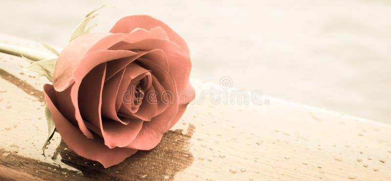 O vermelho romântico levantou-se fotografia de stock royalty free