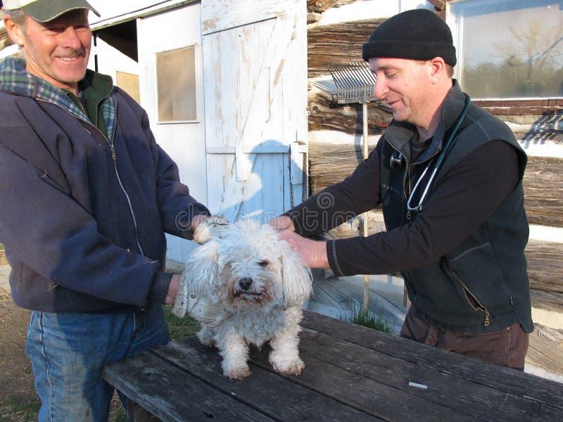 O veterinário do país faz uma exploração agrícola chamar imagem de stock