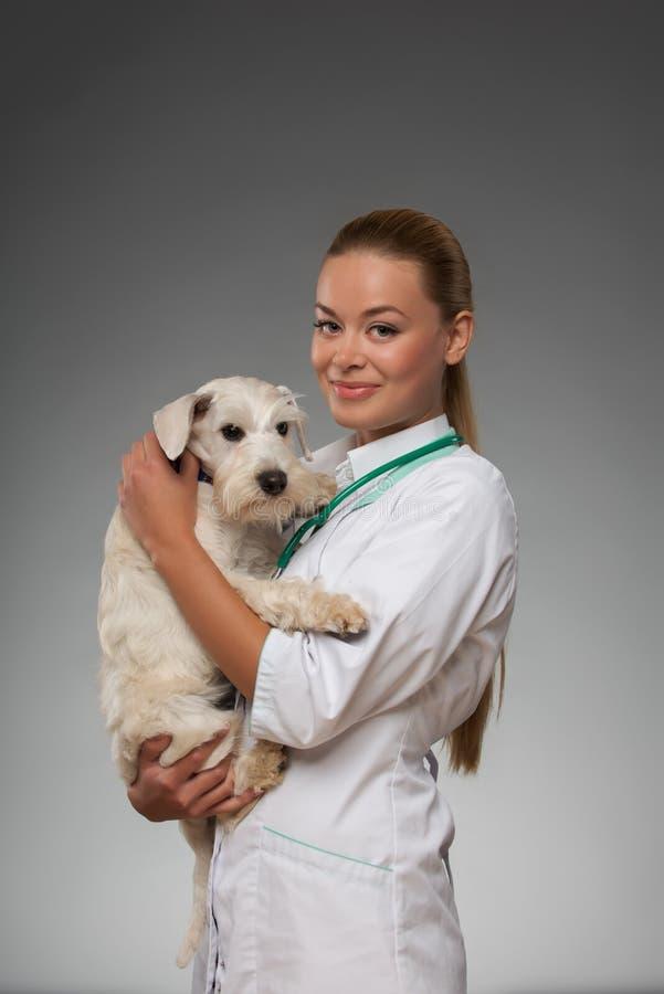 O veterinário fêmea examina o cão pequeno foto de stock