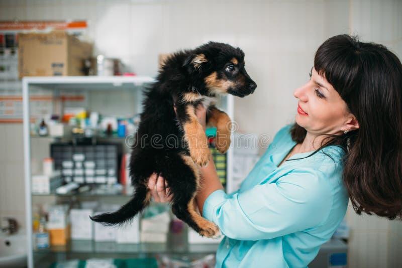 O veterinário guarda o cão nas mãos, clínica veterinária fotografia de stock