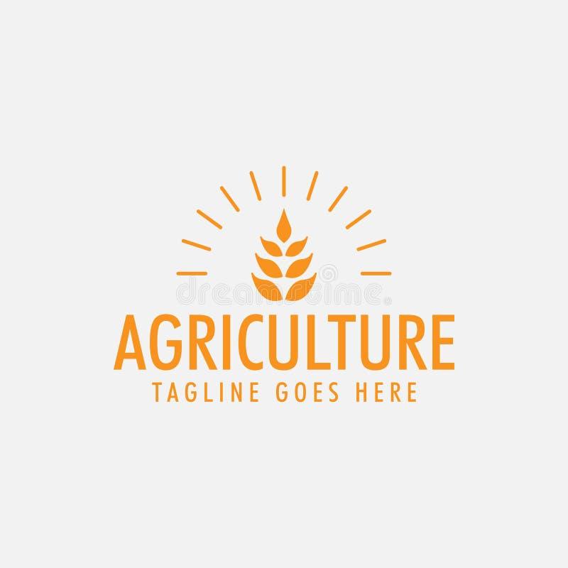 O vetor do molde do projeto do logotipo do trigo da agricultura isolou-se ilustração do vetor