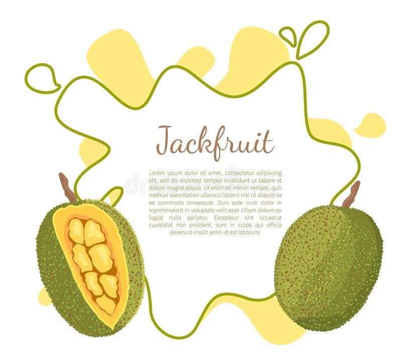 O vetor suculento exótico do fruto de pedra do Jackfruit isolou-se ilustração stock
