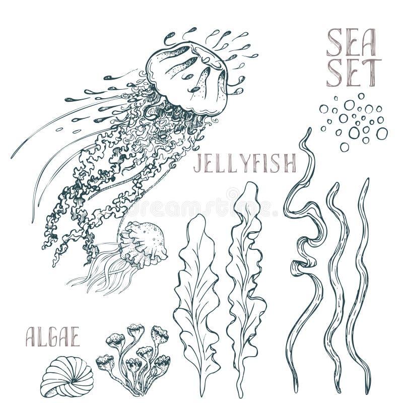 O vetor tirado mão da alga ajustou-se no fundo branco ilustração royalty free