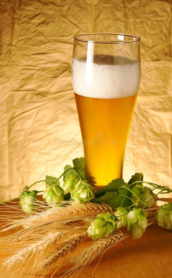 O vidro da cerveja imagem de stock