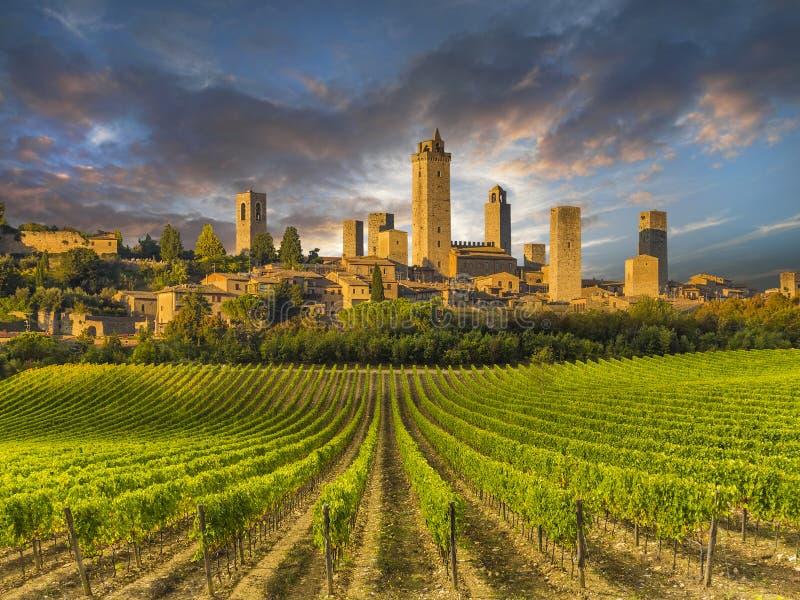 O vinhedo cobriu montes de Toscânia, Itália fotografia de stock royalty free