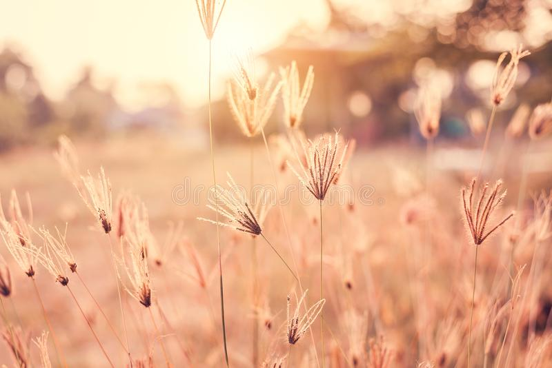 O vintage da flor bonita tem o foco macio no fundo do por do sol foto de stock