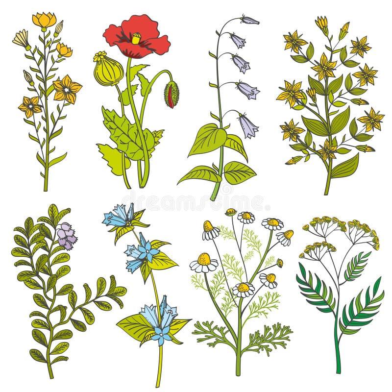 O vintage das ervas e das flores selvagens vector a ilustração de cor ilustração do vetor