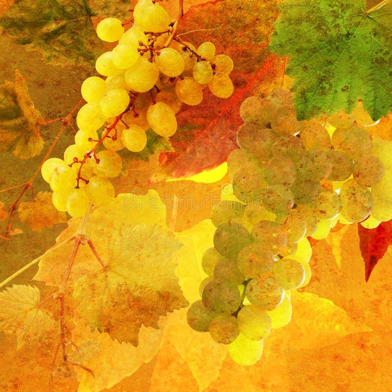 O vintage denominou o grupo de uvas imagens de stock royalty free