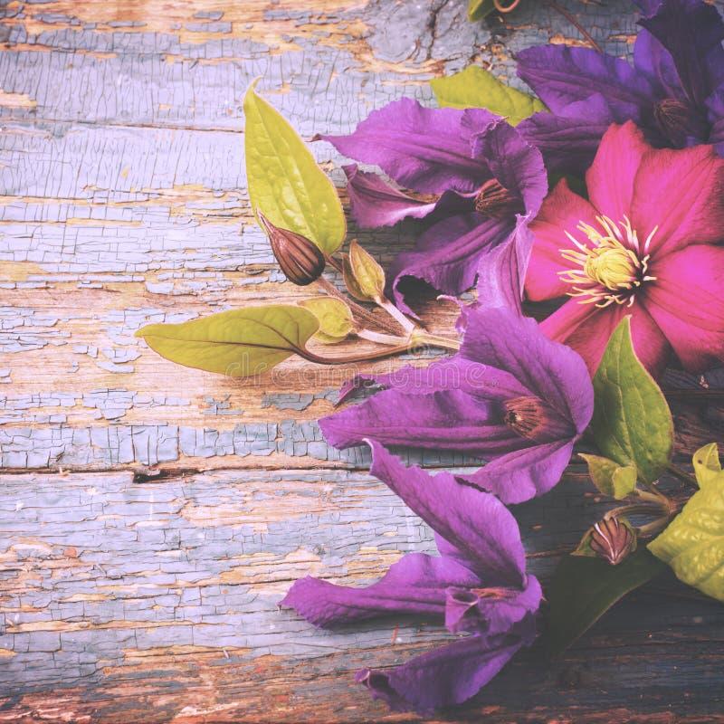 O vintage do jardim floresce o fundo de madeira velho toned foto de stock royalty free