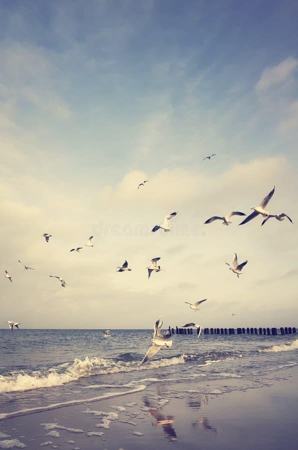 O vintage estilizou a imagem de pássaros de voo em uma praia imagens de stock royalty free