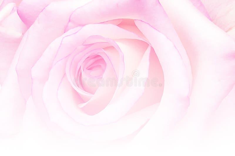 O vintage romântico Rosa com sumário borrou o fundo da flor fotografia de stock royalty free