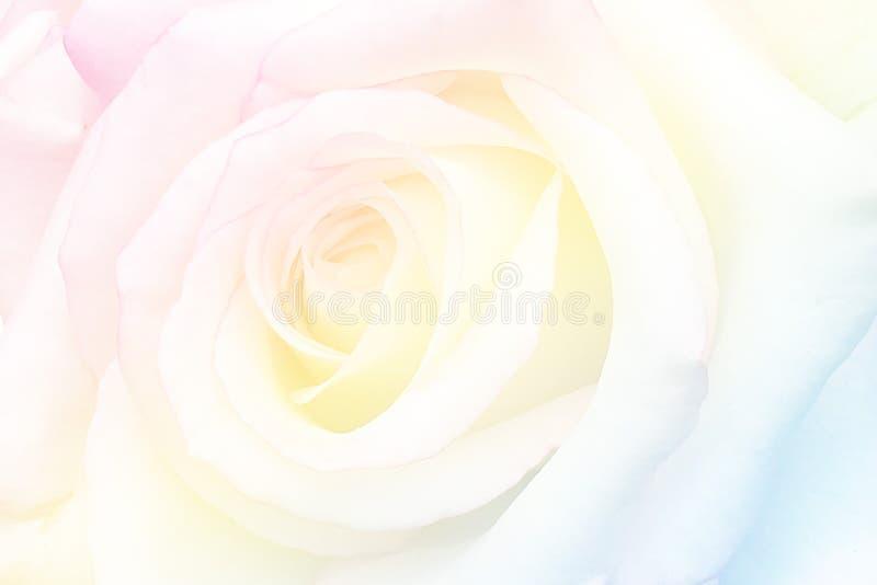 O vintage romântico Rosa com sumário borrou o fundo da flor fotos de stock royalty free