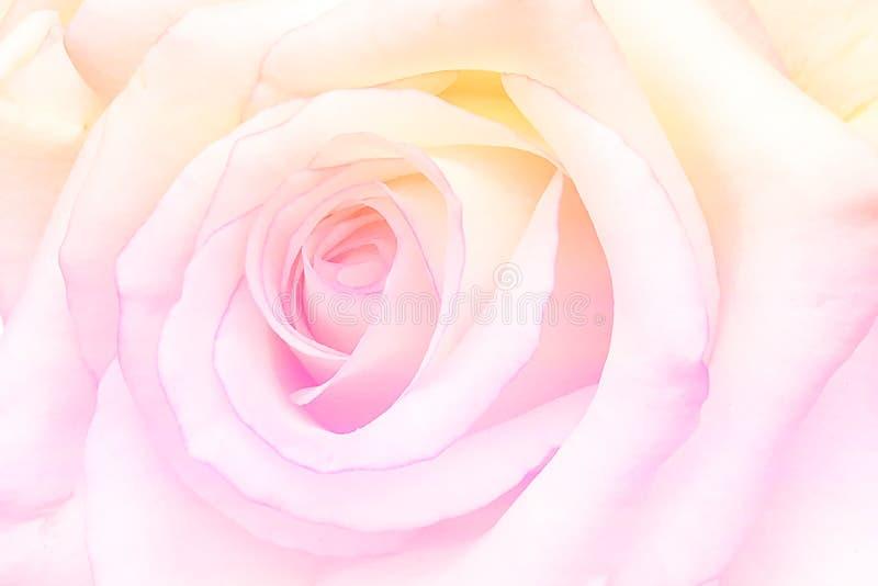 O vintage romântico Rosa com sumário borrou o fundo da flor fotos de stock