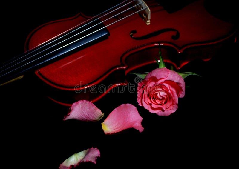 O violino & levantou-se imagem de stock royalty free