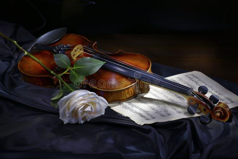 O violino com levantou-se imagens de stock