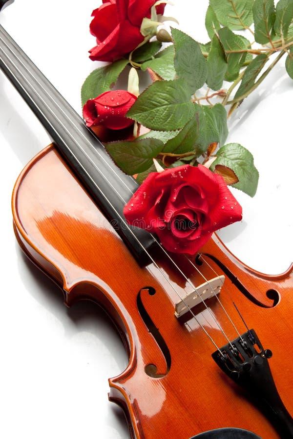 O violino e levantou-se fotos de stock royalty free