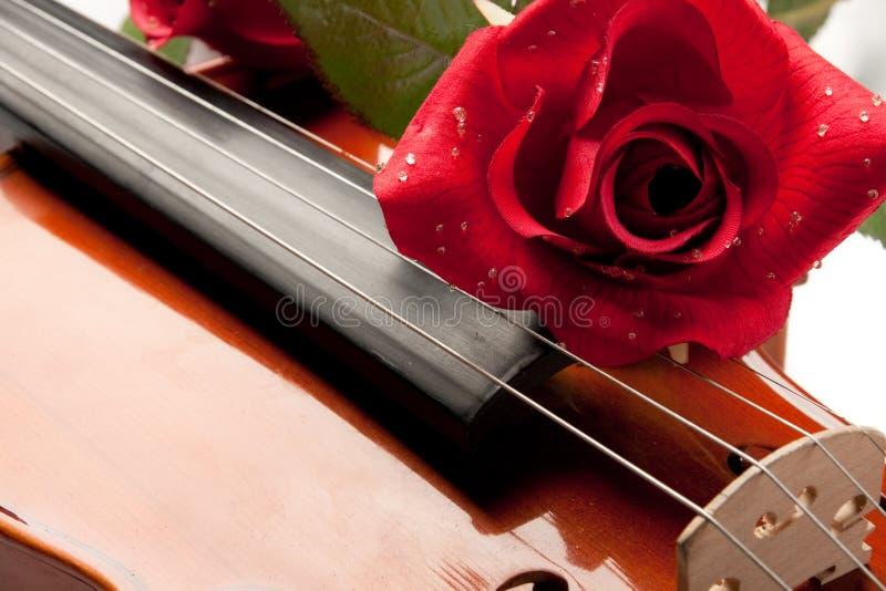 O violino e levantou-se imagens de stock royalty free