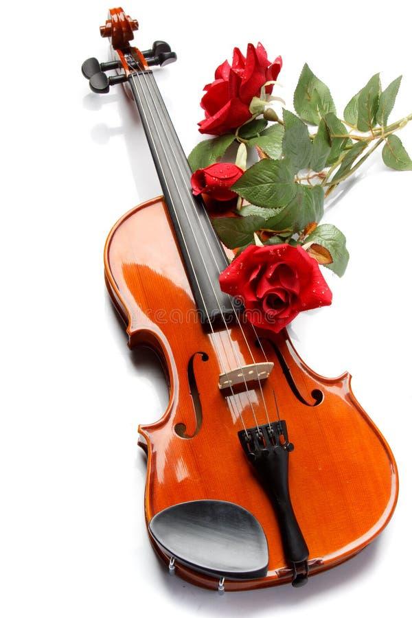O violino e levantou-se fotos de stock