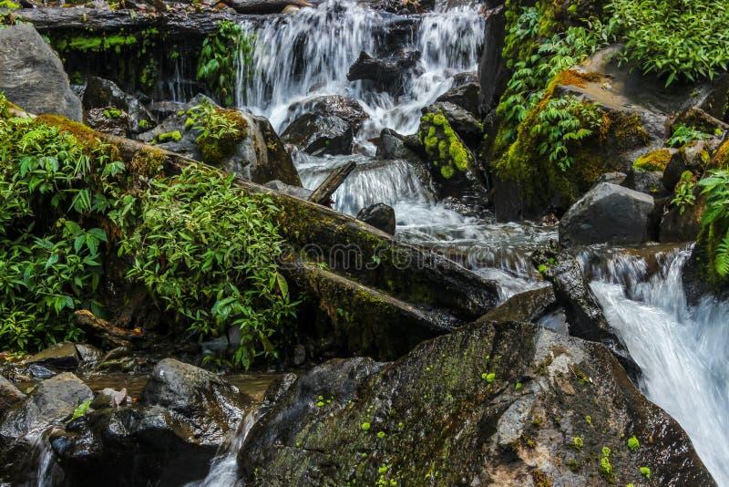 O volume de água na selva fotografia de stock royalty free
