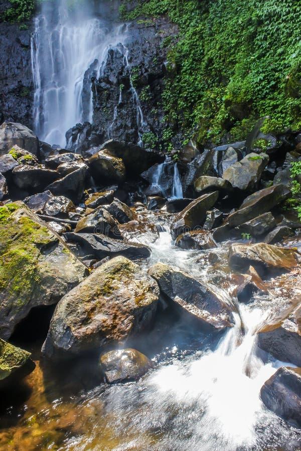O volume de água na selva imagem de stock royalty free