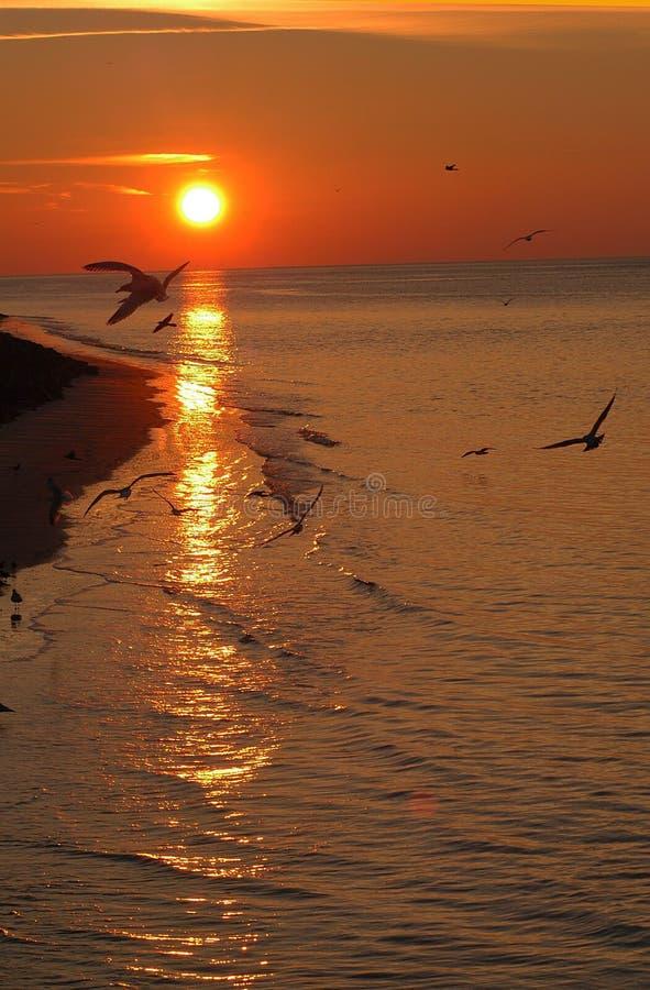 Download O świcie zdjęcie stock. Obraz złożonej z morze, ocean, kipiel - 25572