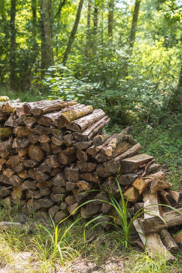 O Woodpile na floresta do verão empilhou logs de madeira velhos vistos imagens de stock royalty free