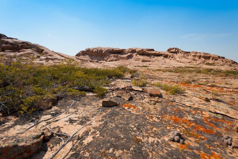 O zimbro cresce em pedras com líquene e musgo no fundo das montanhas imagens de stock