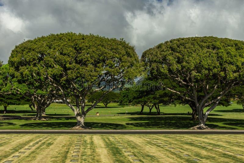 Hawaiian trees at National Memorial Cemetery of the Pacific, Oahu, Hawaii, USA. Oahu, Hawaii, USA. - January 10, 2012: Wide shot over green National Memorial stock photo