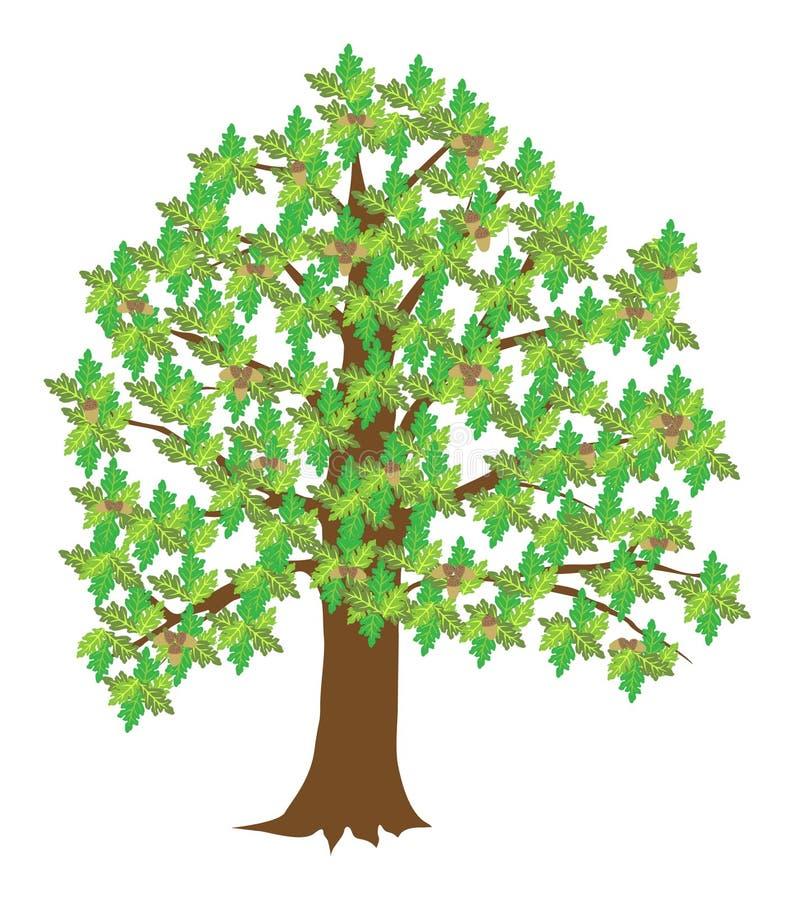 Download Oak stock vector. Image of leaf, large, glans, trunk - 15174126
