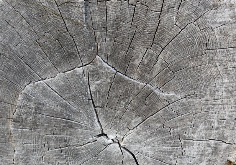 oak royaltyfri bild