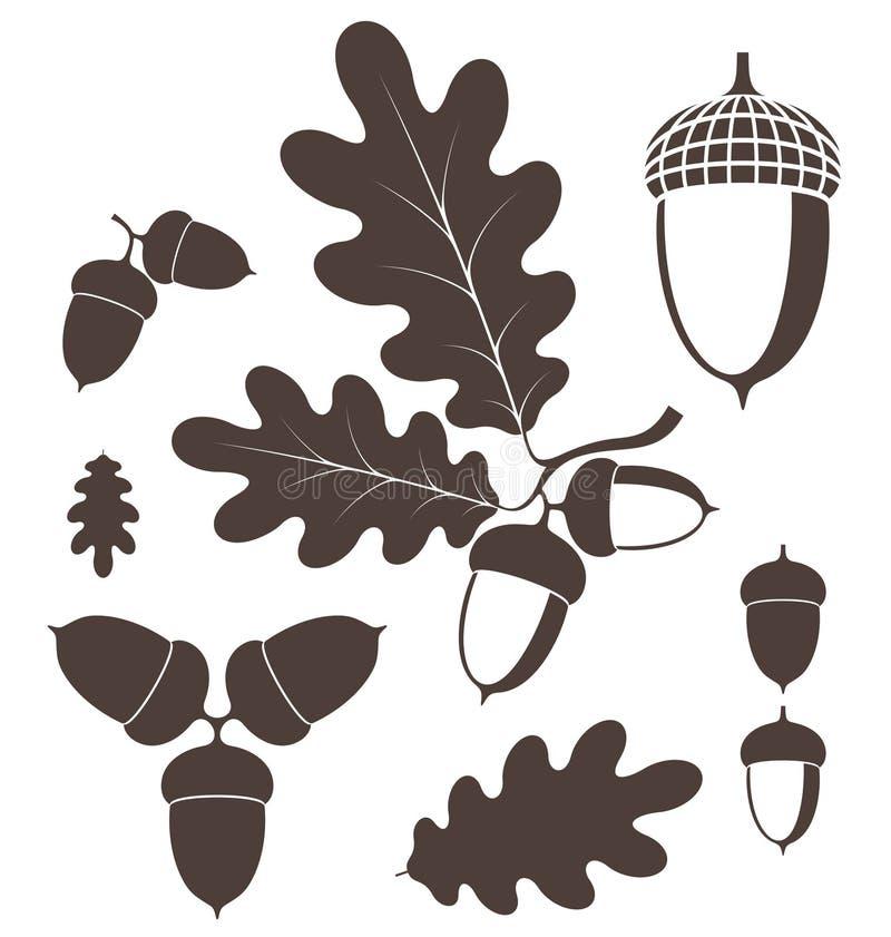 Free Oak. Acorn Stock Images - 44740384