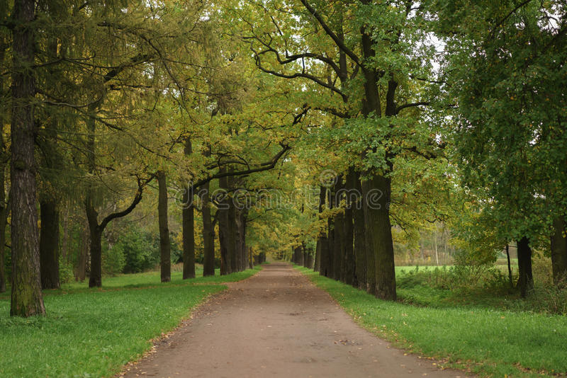 Oak alley in park in early autumn royalty free stock photography