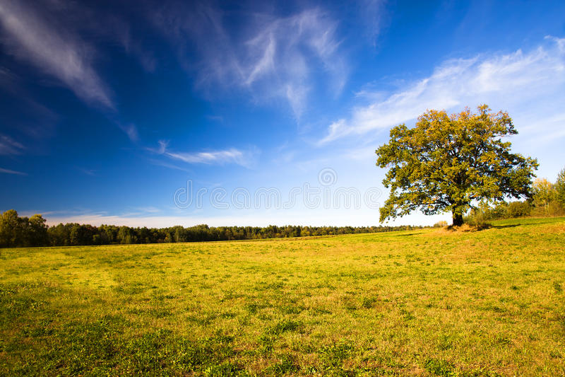 Oak (autumn)