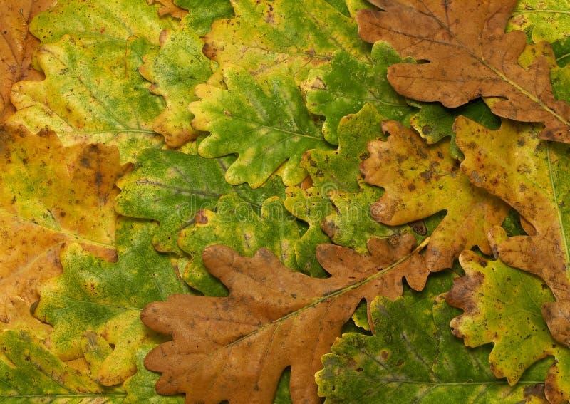 Download Oak background stock image. Image of pattern, desktop - 3716241