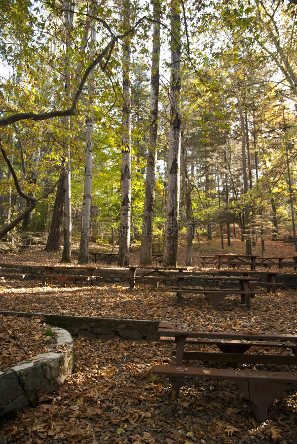 Download Oak forest picnic site stock image. Image of fireplace - 27836351
