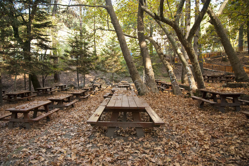 Oak Forest Picnic Site Royalty Free Stock Image