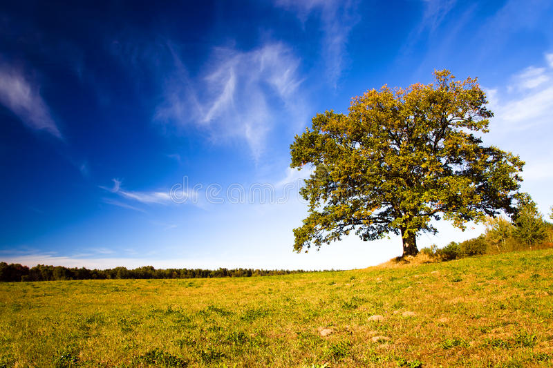 Download Oak growing in the field stock photo. Image of natural - 21618742