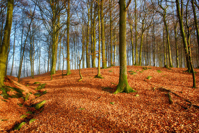 Oak tree hill royalty free stock images