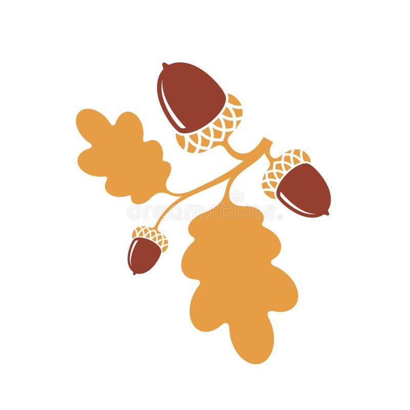 oak kli Isolerade ekollonar på vit bakgrund royaltyfri illustrationer