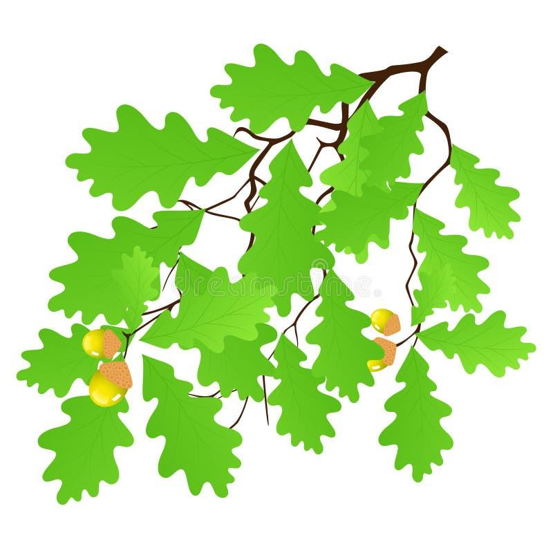 Download Oak leaf stock vector. Illustration of grass, stem, silhouette - 15624989