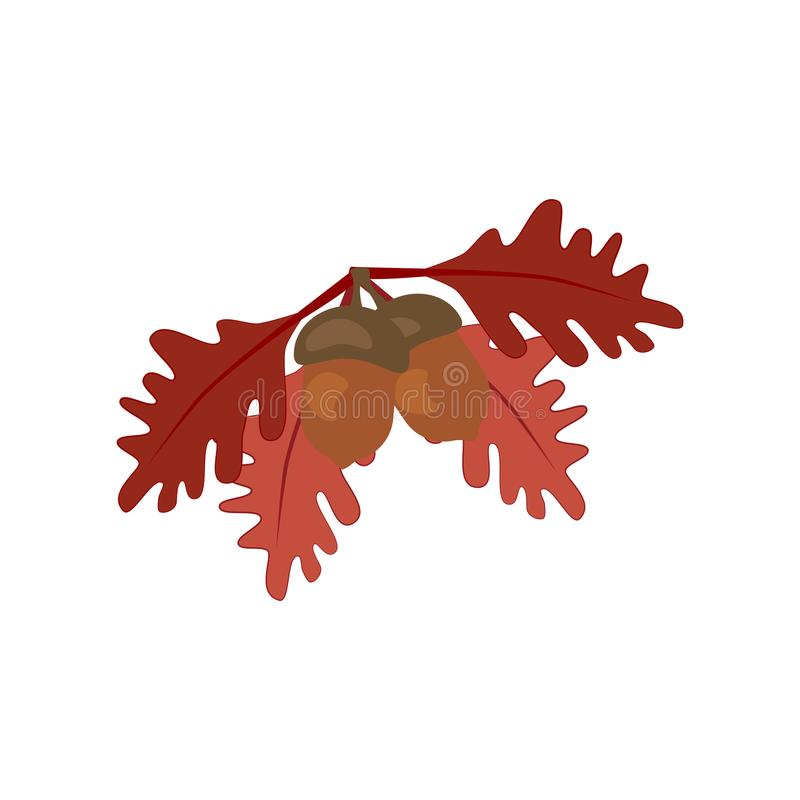Oak leaf and acorn royalty free illustration
