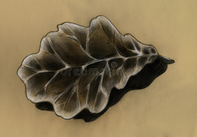 Download Oak leaf - sketch stock illustration. Image of picture - 13843002