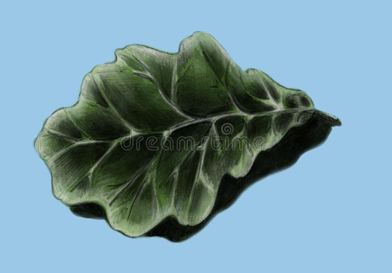 Oak Leaf - Sketch Stock Photography